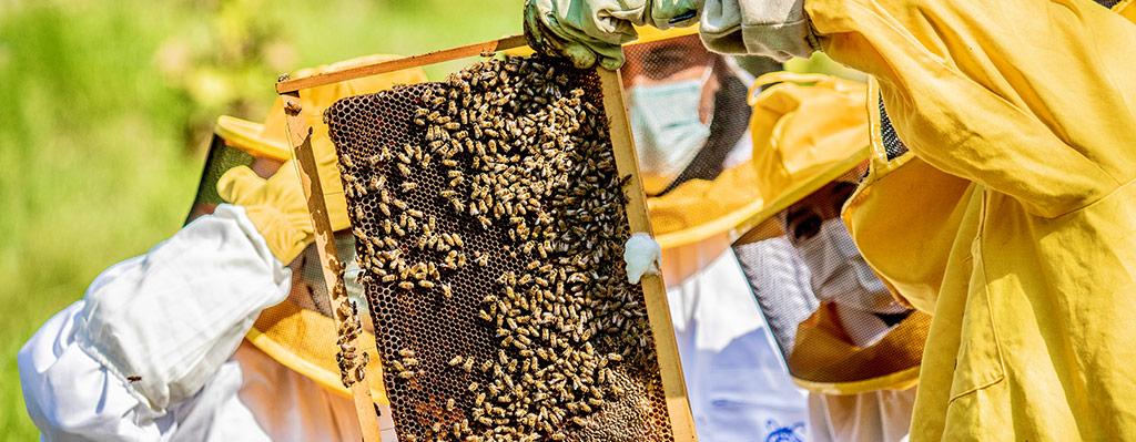 Giornata mondiale delle api: abbiamo un progetto molto speciale